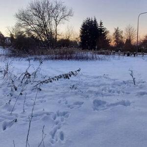 Winter 2020/2021 mit Hasenspuren