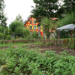 Juli 2021 – Kartoffelpflanzen und ein Dach für die Tomaten